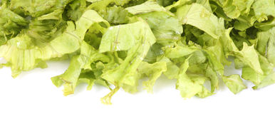 Lettuce leaves Stock Image