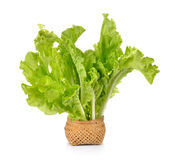 Lettuce leaves in the basket isolated on white background Royalty Free Stock Images