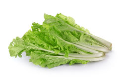 Lettuce leaves in the basket  on white background Royalty Free Stock Photos