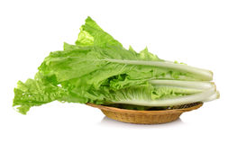 Lettuce leaves in the basket  on white background Stock Photography