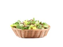 Lettuce leaves and beet in basket. Stock Images