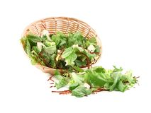 Lettuce leaves and beet in basket. Royalty Free Stock Image