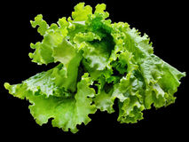 Lettuce leaves on black Royalty Free Stock Photography