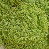 Lettuce leaves closeup Royalty Free Stock Photography