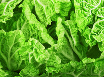 Lettuce leaves Royalty Free Stock Images