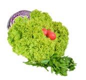Lettuce leaves and garden radish Stock Photography