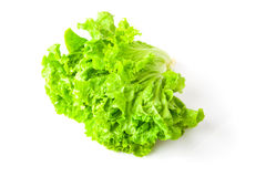 Lettuce leaves green Stock Photo