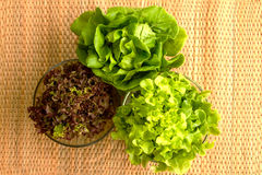 Lettuce leaves. For healthy eating Stock Images