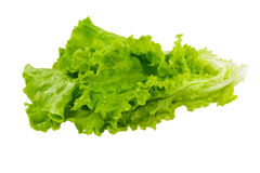 Lettuce leaves isolated Royalty Free Stock Image