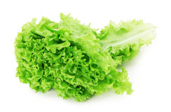 Lettuce leaves isolated on the white background Royalty Free Stock Image