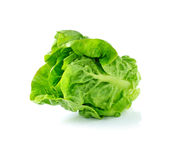 Lettuce leaves Stock Photo