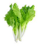 Lettuce leaves isolated on white background Royalty Free Stock Images