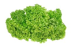 Lettuce leaves isolated on white. Close up stock image