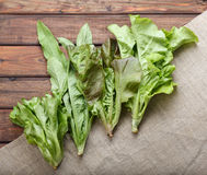 Lettuce leaves mix Royalty Free Stock Images