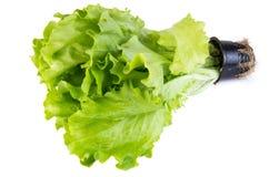 Lettuce leaves in pot Stock Photos