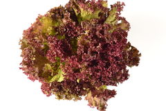 Lettuce leaves of purple Royalty Free Stock Photos
