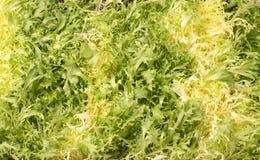 Lettuce leaves - vegetarian background Stock Image