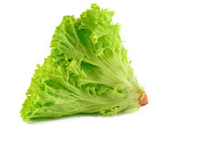 Lettuce leaves on a white background Royalty Free Stock Images