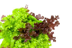 Lettuce leaves on a white background Stock Photography