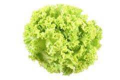 Lettuce - lollo bindo stock images