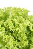 Lettuce - lollo bindo stock image
