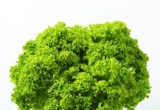 Lettuce Lollo Bionda Royalty Free Stock Image