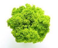 Lettuce Lollo Bionda Stock Images