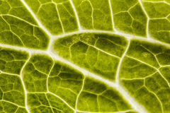 Lettuce macro Royalty Free Stock Photos