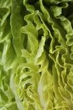 Lettuce macro shot Stock Photo