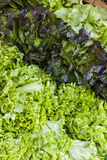 Lettuce. Market in Forcalquier, Provence, France Royalty Free Stock Images