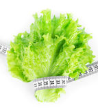 Lettuce with measuring tape Stock Image