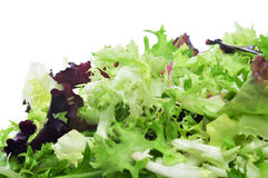 Lettuce mix Royalty Free Stock Photography