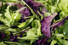 Lettuce - Mixed Baby Leaves. A close up of mixed baby green and red lettuce Stock Photos