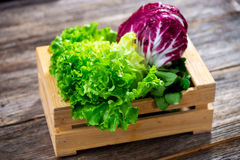 Lettuce Royalty Free Stock Photography