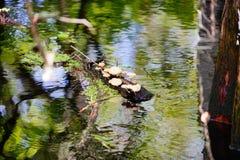 Lettuce park and hillsborough river. Lettuce park lake and hillsborough river in Tampa, Florida royalty free stock image