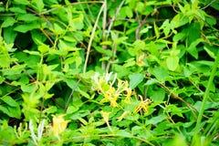 Lettuce park flower stock photos