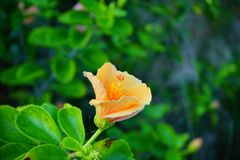 Lettuce park flower. Lettuce park in Tampa, Florida royalty free stock images