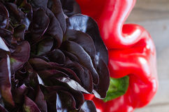Lettuce and pepper Royalty Free Stock Photography