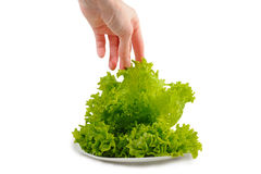 Lettuce. On plate and  white background  woman's hand Royalty Free Stock Photo
