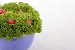 Lettuce with radish Stock Images