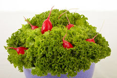 Lettuce with radish Royalty Free Stock Photography