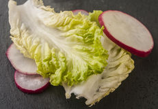Lettuce radish close up. Fresh lettuce radish close up Royalty Free Stock Photos