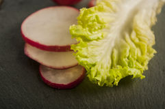 Lettuce radish close up. Fresh lettuce radish close up Stock Images