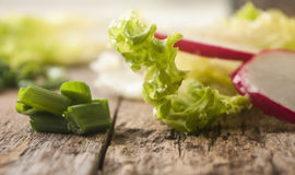 Lettuce radish close up. Fresh lettuce radish close up Stock Photos