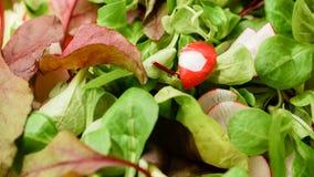 Lettuce with radish Stock Images