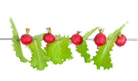 Lettuce and radish on a skewer Royalty Free Stock Images