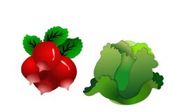 Lettuce and Radishes. A bunch of red radishes and a lettuce head.Background is on a work path Royalty Free Stock Photo