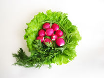 Lettuce, radishes and dill Royalty Free Stock Photo