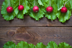Lettuce and radishes. Ingredients for a salad. Free space for text Royalty Free Stock Photography