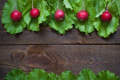 Lettuce and radishes. Ingredients for a salad. Free space for text Stock Images
